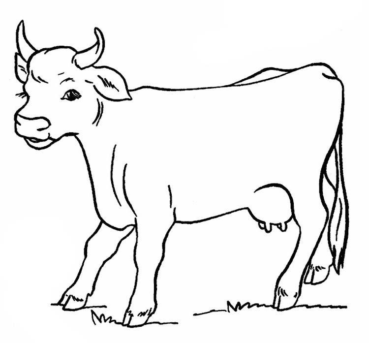 раскраска корова и теленок для малышей