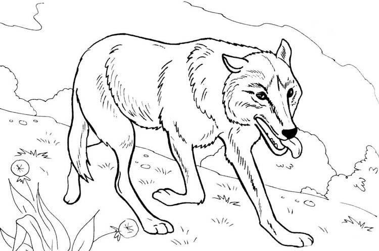 раскраски лесные животные