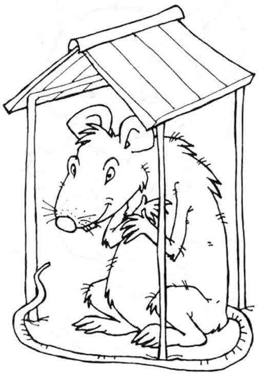 Картинки крыса крыша, улицах