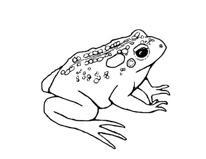 Лягушка в картинках раскрасках