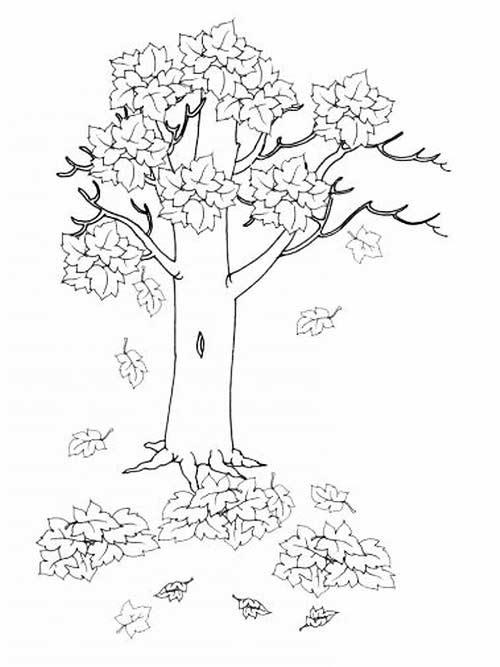 Осенний лес картинки для раскрашивания