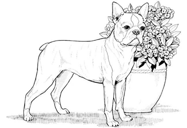 real dogs coloring pages - photo#16