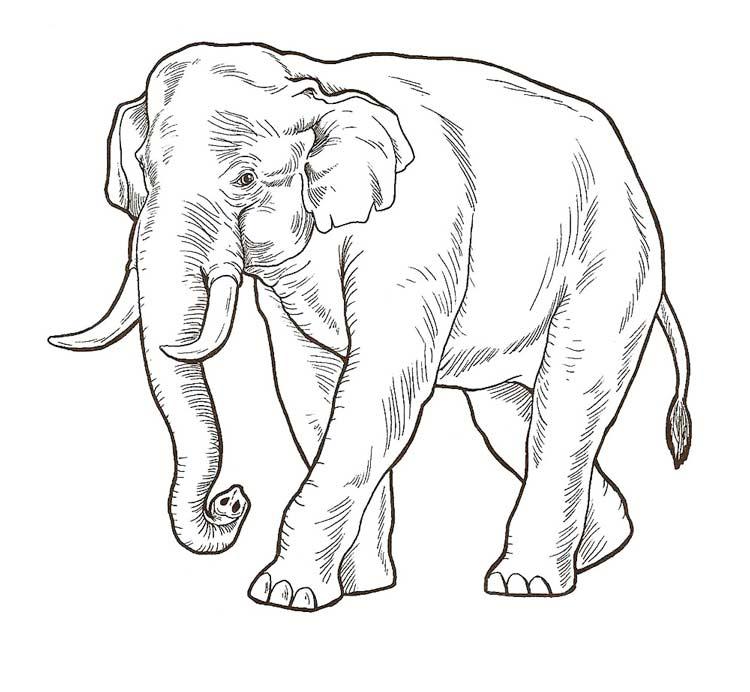 Раскраска по числам с примерами