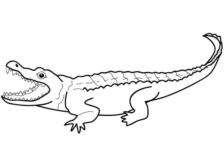 Crocodile drawing outline