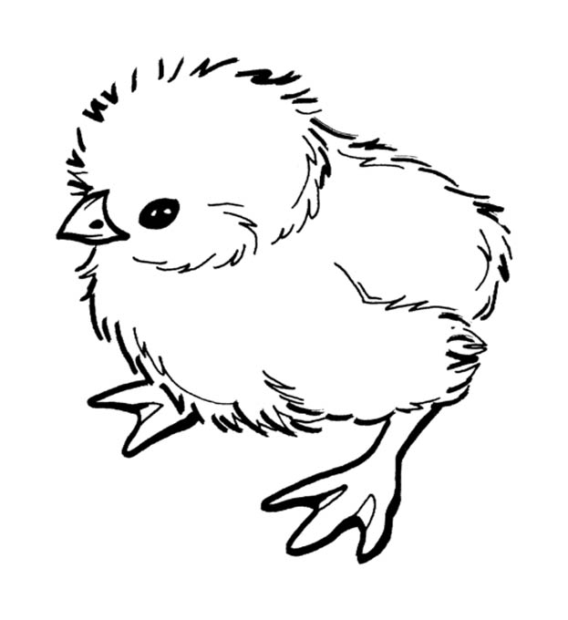 Раскраски для детей цыплята
