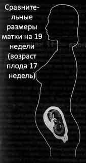 Советы и секреты » Календарь  19 неделя беременности 7e4a8f06e5d